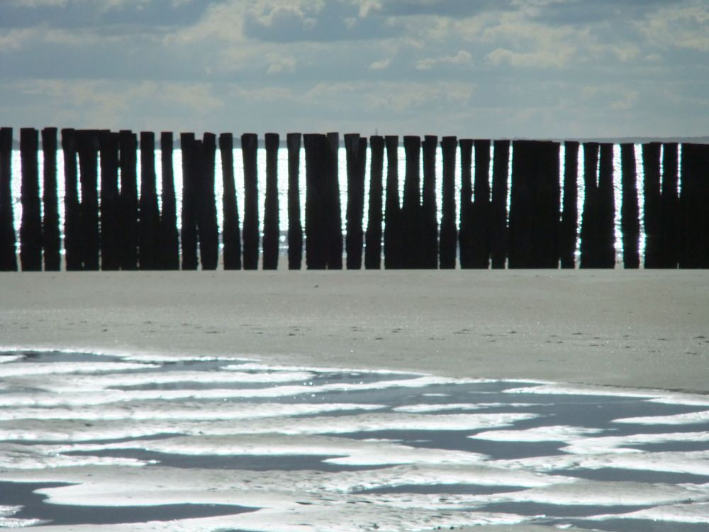 Westenschouwen: strand, zon, zee, duinen, bos (1/5)