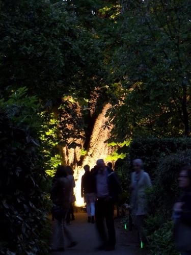 Museumnacht - Fraai uitgelichte boom in de Hortus Botanicus
